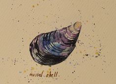 mussel shell | Flickr - Photo Sharing! By Abi Whelan