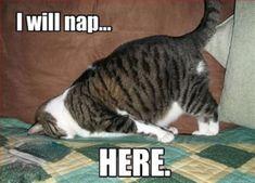 I will nap... HERE. #catoftheday