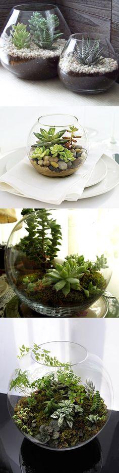 Ten plantas cerca de tu lugar de trabajo y en tu casa. Recicla una pecera o recipiente de cristal y ten una linda maceta.
