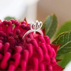 Silver Protea Ring Minimalist Jewelry, Jewellery, Rings, Silver, Jewelery, Money, Jewlery, Ring, Jewelry Rings