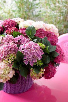 Raindrops and Roses: Photo Beautiful Flower Arrangements, Pretty Flowers, Fresh Flowers, Floral Arrangements, My Flower, Flower Vases, Flower Power, Bloom, Hortensia Hydrangea