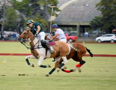 Polo Fall season in Argentina and Uruguay, before many players will travel to Europe for the polo summer season