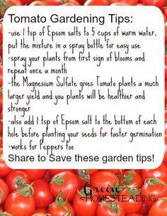 Tomato Gardening Tips: High Yield Tomatoes Using Epsom Salt, DIY Tomato Gardening Tips From Green Homesteading: use 1 tsp of Epsom salts to 5 cups of warm water, put the mixture in a spray bottle f… More