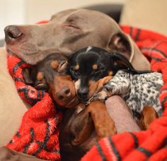 Cute doggies sleeping #love #cutefamily