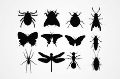 Insect Silhouettes Vector (Free) | Free Vector Archive