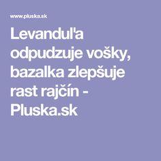 Levanduľa odpudzuje vošky, bazalka zlepšuje rast rajčín - Pluska.sk