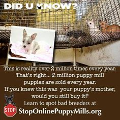 2 million puppy mill puppies are sold every year.