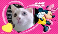 I love cat's . I Love Cats, Minnie Mouse, My Love, My Boo, Mini Mouse