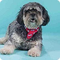 Adopt A Pet :: KASH - St. Louis, MO