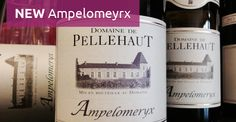 The brand 'Ampéloméryx' references the local, long-extinct mammal – half deer, half giraffe – whose name means 'ruminant of the vineyard'. Steak Tartare, Red Fruit, France, Creamy Sauce, Extinct, Wines, Giraffe, Deer, Vineyard