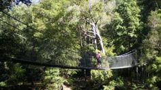 Touring the Central Coast: Piles Creek suspension bridge, Brisbane Water National Park, NSW, Australia