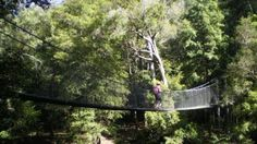Touring the Central Coast: Piles Creek suspension bridge, Brisbane Water National Park, NSW, Australia