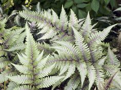 Top plants for wet soil Our Top 10 plants for wet soil will help keep a boggy area of garden looking fresh and colourful.
