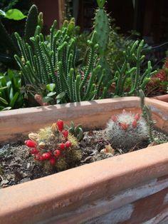 Cactus floreciendo en noviembre