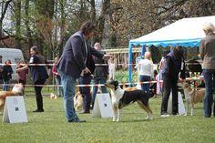 Klubová výstava KCHKŠ Lučenec - Spring in Roseland Pixies, Spring, Dogs, Animals, Animales, Animaux, Pet Dogs, Doggies, Animal