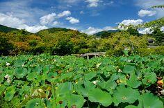 Tenryu-Ji, Arashiyama / 天龍寺(京都・嵐山)