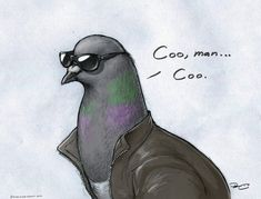 Coo Pigeon...THIS SHOULD BE A MEME