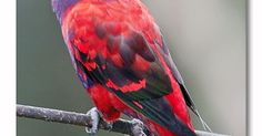 Parrot - sweet image
