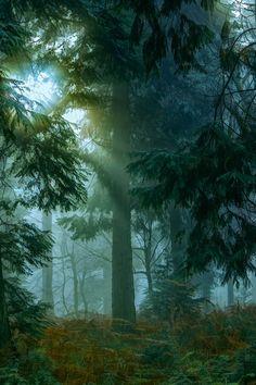 decembre brume soleil by hubert61