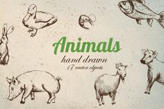 Vector Animal Pack by MonstroCity on @creativemarket