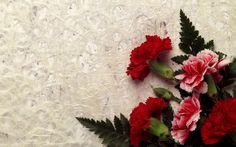 Flowers hd wallpape, flower hd wallpaper | Amazing Wallpapers