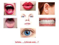 PRUEBA LÉXICO – SEMÁNTICA. Las partes del cuerpo Lipstick, Beauty, Language, School, Fields, Body Bones, Human Body Parts, Spanish Vocabulary, Speech Therapy