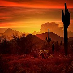 """The saguaro cactus and the beautiful sunsets over the Sonoran Desert are the essence of the southwest. """"PUBLISHED"""" as the cover for the 2014 Capture My Arizona Calendar. Desert Aesthetic, Orange Aesthetic, New Mexico Santa Fe, Western Landscape, Way To Heaven, Desert Sunset, Southwest Art, Thing 1, Beautiful Sunset"""
