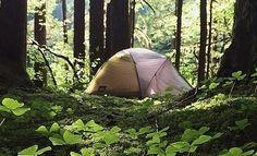 7 Consejos para acampar en la naturaleza sin da�arla