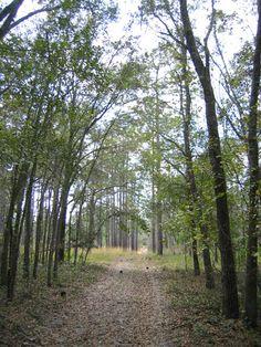 Wekiwa Springs State Park, Apopka, Florida. http://www.floridastateparks.org/wekiwasprings/
