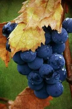 the fruit of life. Fruit And Veg, Fruits And Vegetables, Fresh Fruit, Fresh Figs, Fruits Photos, Wine Vineyards, Vides, Fruit Photography, Beautiful Fruits