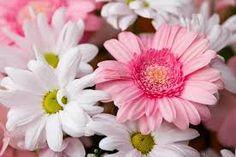 Hasil gambar untuk karangan bunga zinnia