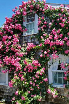 Rose covered cottage!