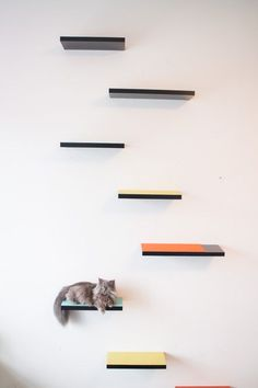 How to build cat shelves your cat will love! #WaysToWOW