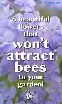 {6 Beautiful Flowers} that won't attract bees to your garden!