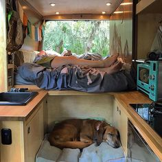 Uschi is adjusting to the #vanlife