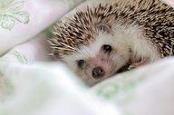 I want to hug this hedgehog