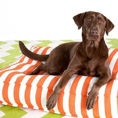 Trimaran Stripe WOUFs™ Pet Bed - frontgate