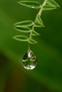 Freedom Rain .......................... - Andrew Osokin - LensArt.ru
