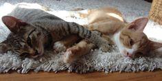 Cats, Animals, Animal Welfare, Round Round, Animales, Gatos, Animaux, Animal, Cat