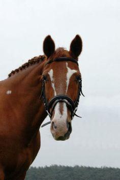 Image result for unique blaze horses