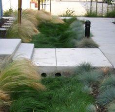 New Urban Landscape Design Walkways Grass Ideas Urban Landscape, Landscape Design, Garden Design, Modern Landscaping, Front Yard Landscaping, Rain Garden, Ornamental Grasses, Landscape Architecture, Garden Inspiration