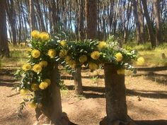 Forest Wedding Venue, Wedding Venues, Mountain View, Reception, Plants, Wedding Reception Venues, Wedding Places, Receptions, Plant