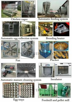 Poultry Equipment, Chicken Cages, Cleaning, Home Cleaning