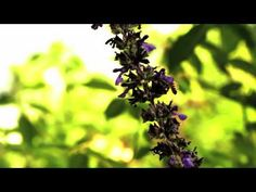 I wanted to see how far I could take the recordings of bees into the realm of music. The bee produces about 200-230 wing flaps pr. second, which is enough to...