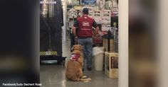 """This Veteran And His Therapy Dog Didn't Ask For Special Treatment — Only A Chance to Work 