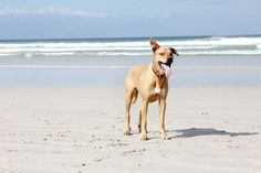 #pet #photography #muizenberg #beach