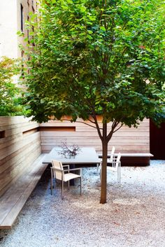 Modern Backyard With Gravels And Linden Shade Tree : Shade Trees For The Backyards