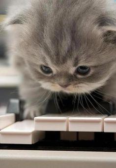 playin kittin