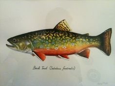 CATCH AND RELEASE: My first Brook Trout Painting
