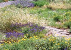 The Mary Wattis Brown Garden of California Native Plants in Davis, CA. Great place for native landscape ideas!